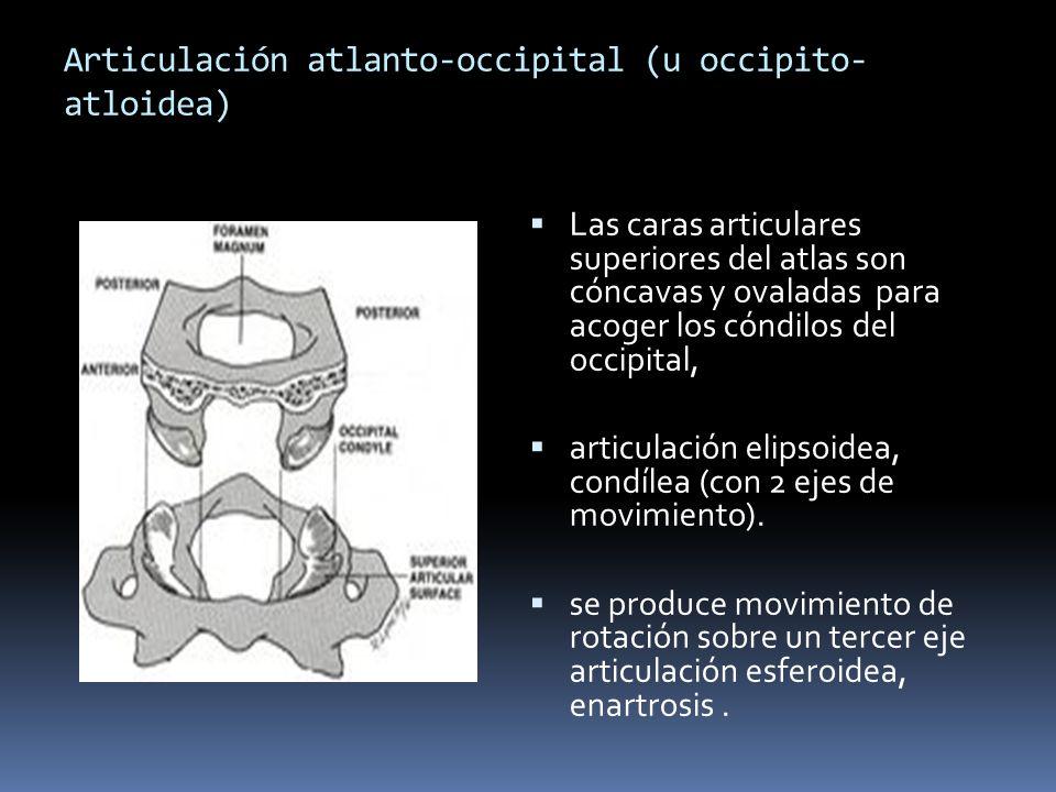 BIOMECÁNICA DE COLUMNA CERVICAL - ppt descargar