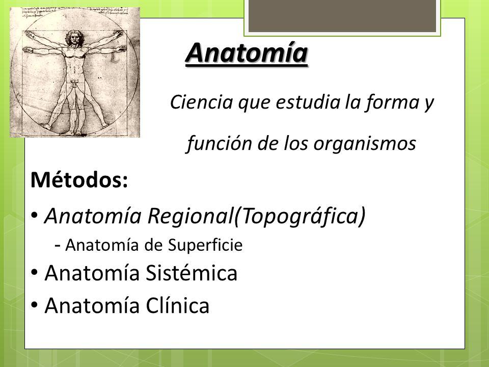 Introducción a la Anatomía Zabdy Pittí. - ppt video online descargar