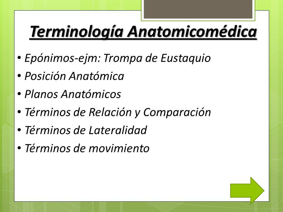 Increíble La Anatomía Y La Terminología Médica Embellecimiento ...
