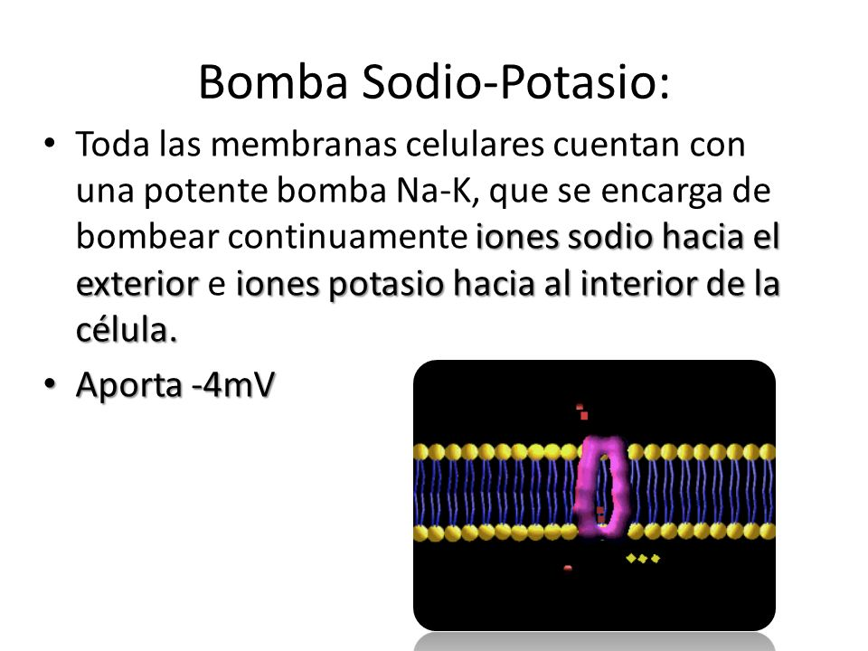 Bomba Sodio-Potasio: