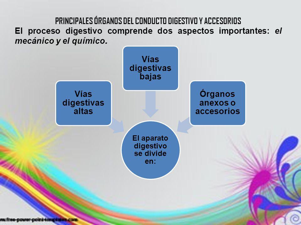SUBTEMA: SISTEMAS. ANATOMÍA, FISIOLOGÍA E HIGIENE - ppt video online ...