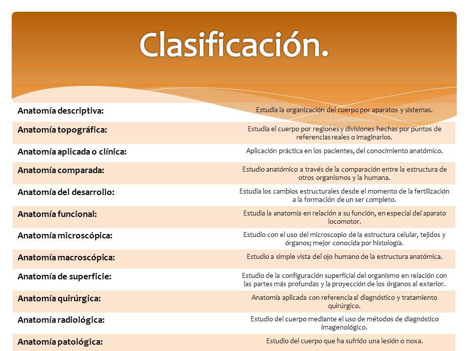 Generalidades de anatomía. - ppt descargar