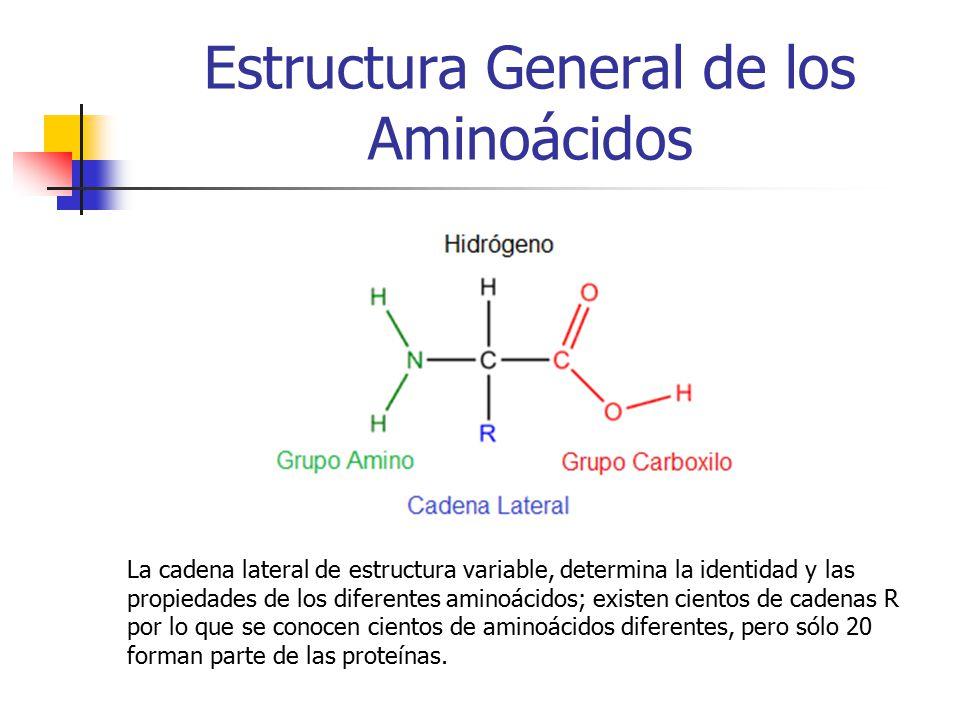 Aminoácidos Y Proteínas Ppt Descargar
