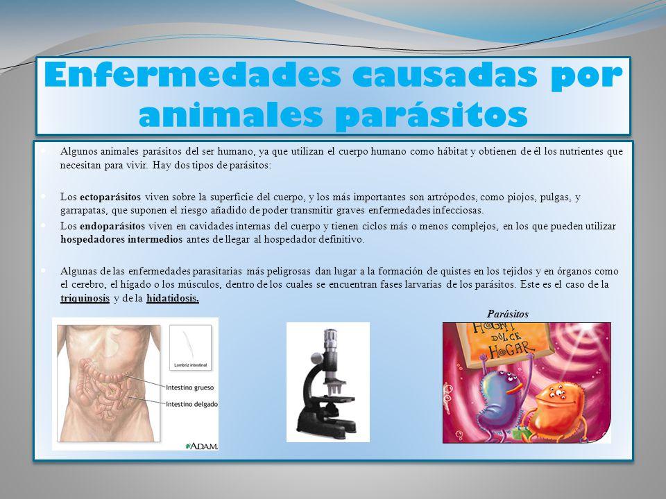 enfermedades infecciosas y parasitarias del ganado