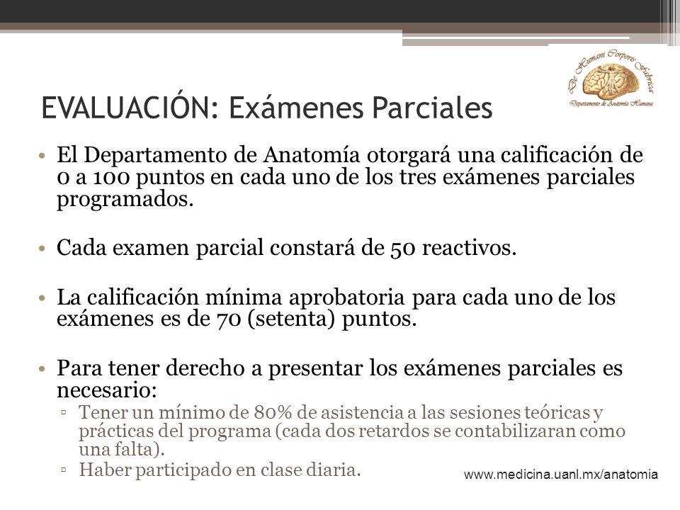 Perfecto Exámenes De Anatomía Embellecimiento - Imágenes de Anatomía ...