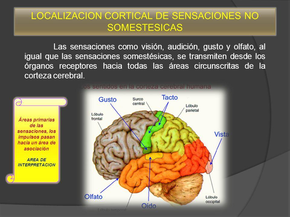 Interpretacion De Las Sensaciones Por El Cerebro Ppt Descargar
