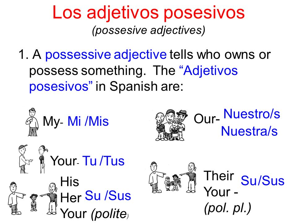Los adjetivos posesivos (possesive adjectives)