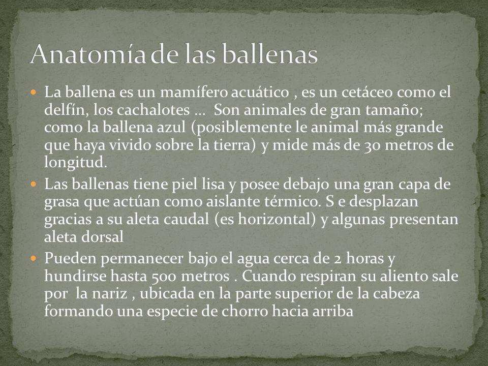 LAS BALLENAS. - ppt descargar