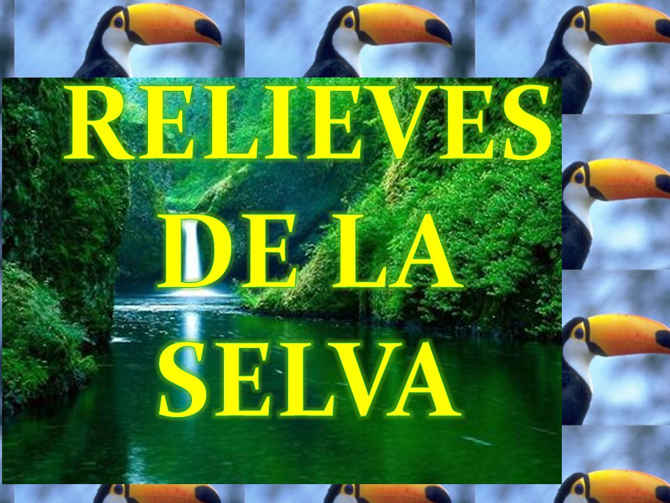 RELIEVES DE LA SELVA