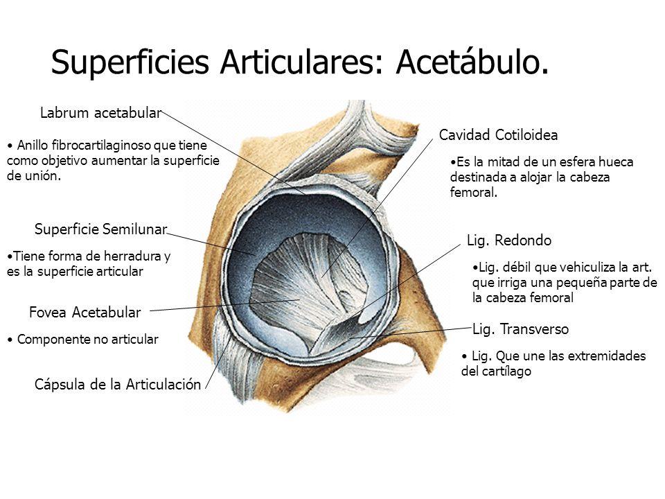 ORTOPEDIA DE CADERA DR. MARTIN BOTTOS. - ppt video online descargar