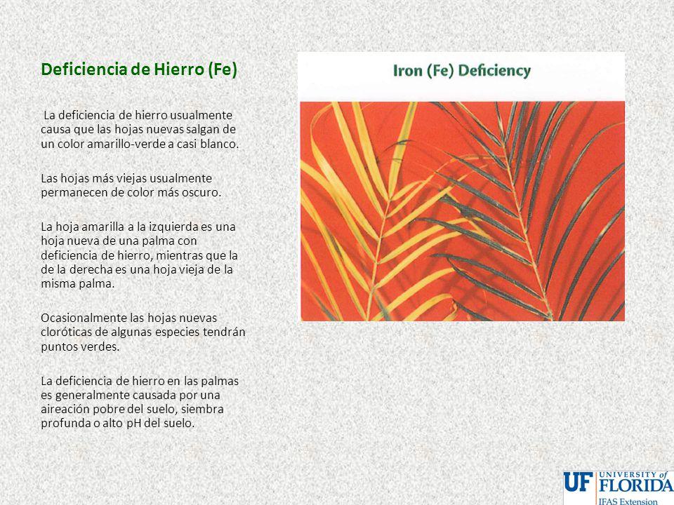 Deficiencias de Nutrientes: PALMAS ORNAMENTALES - ppt video online ...
