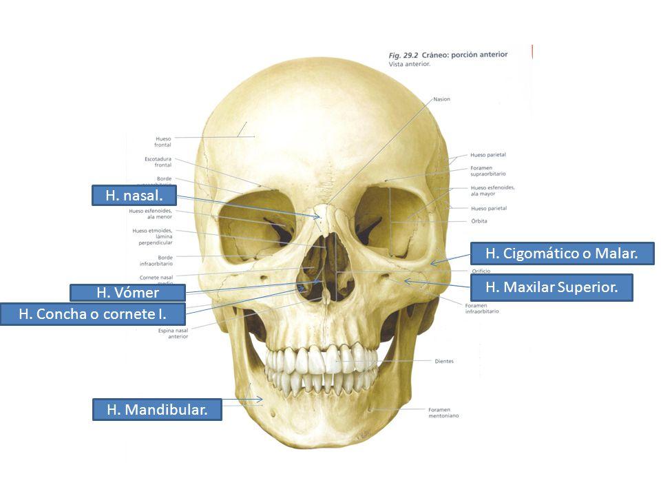 Curso Anatomía Humana Biomedicina 2011 Dr. J. Vázquez Toriz. - ppt ...