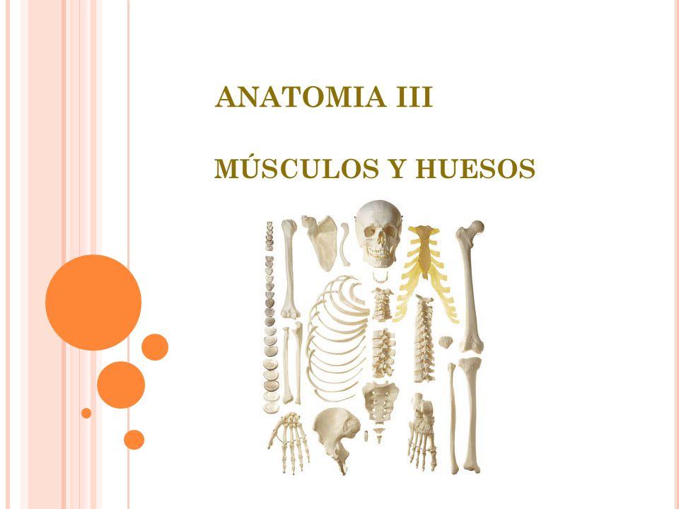ANATOMIA III MÚSCULOS Y HUESOS. - ppt descargar