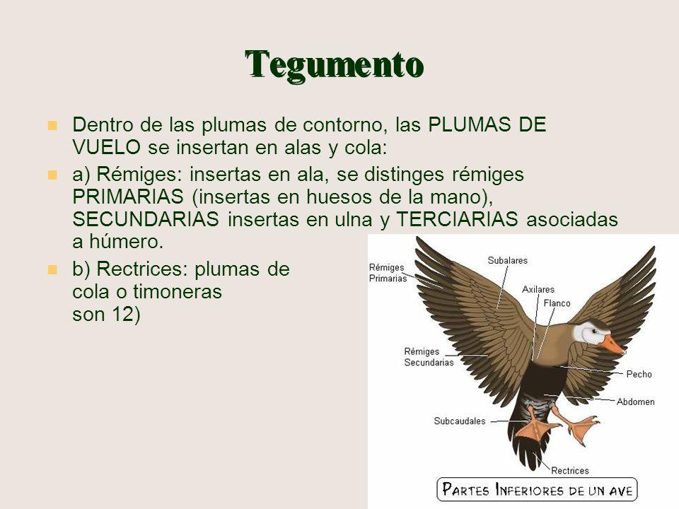 Unidad de Anatomía Veterinaria UST. Santiago Anatomía II - ppt video ...