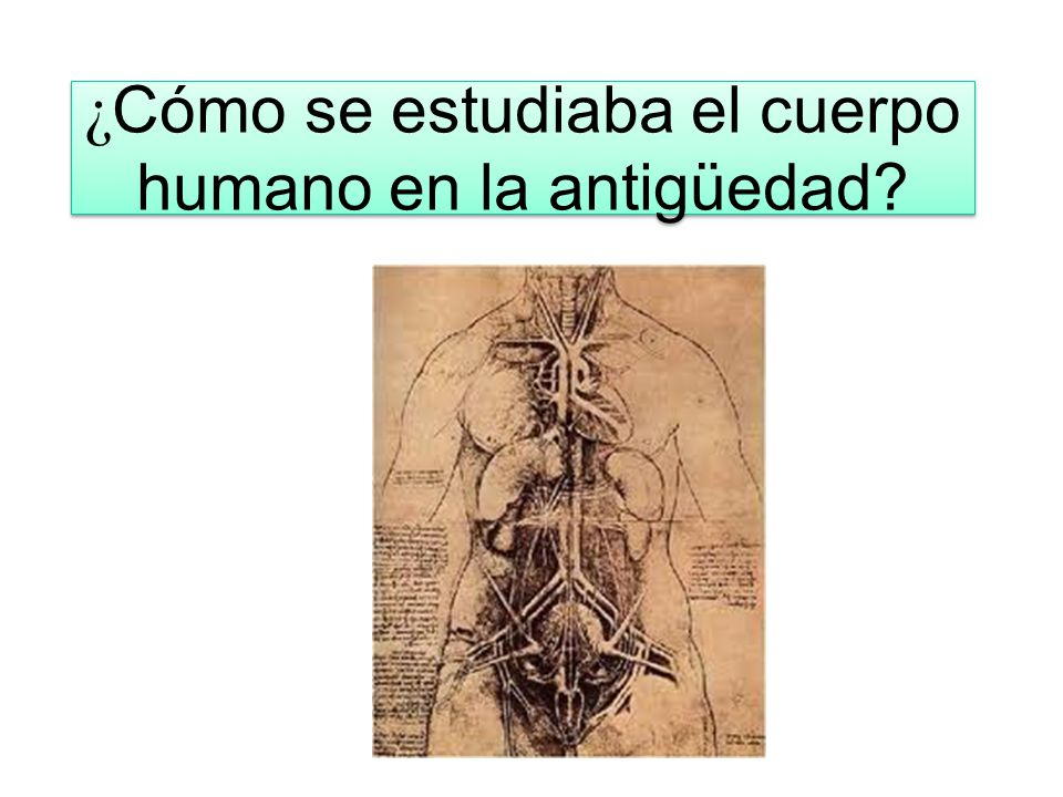 Anatomía macroscópica - ppt video online descargar