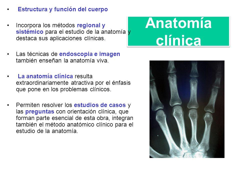 Lujo Cuál Es La Anatomía Sistémica Composición - Imágenes de ...