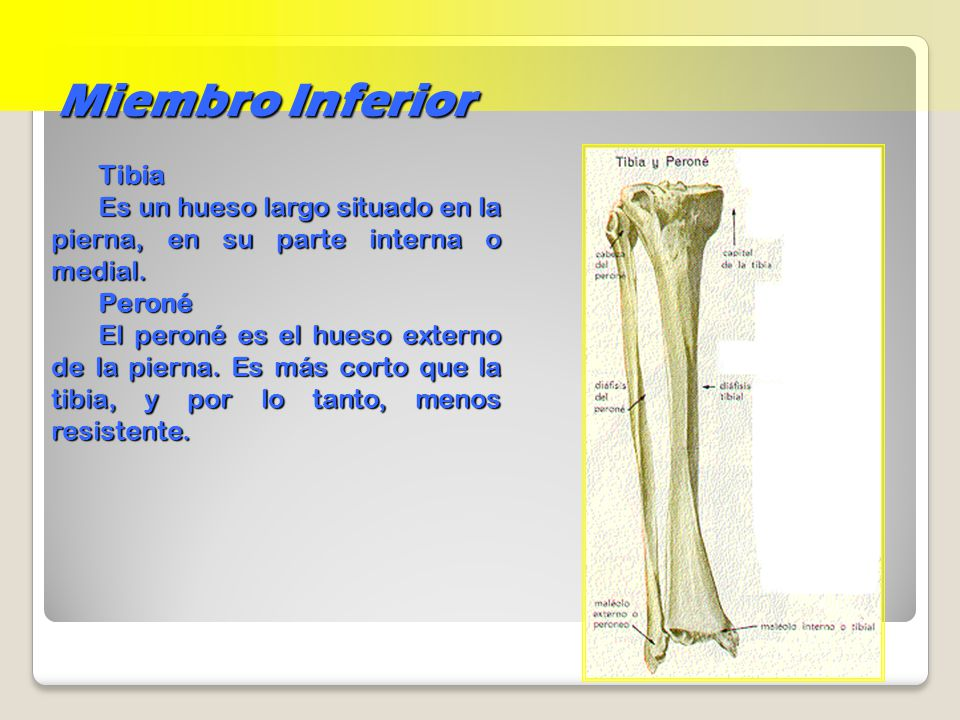 Esqueleto Apendicular - ppt video online descargar