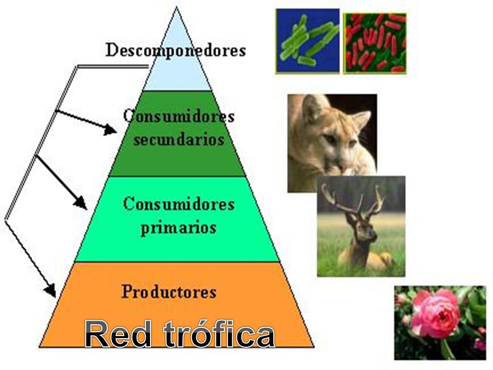 Red trófica