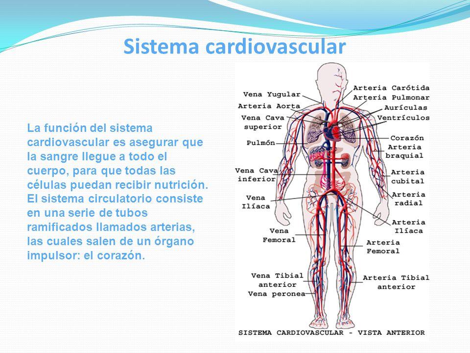 Biopsicología Tema: Aparato circulatorio Sistema circulatorio - ppt ...