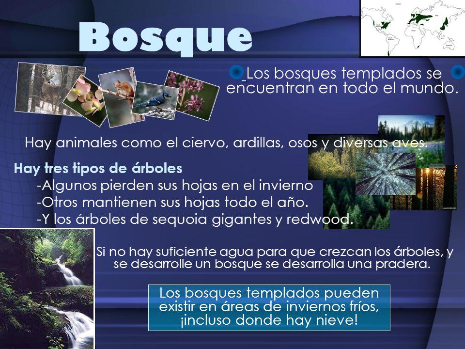 Ecosistemas hay ocho grandes ecosistemas o biomas en el for Cuantos tipos de arboles hay en el mundo