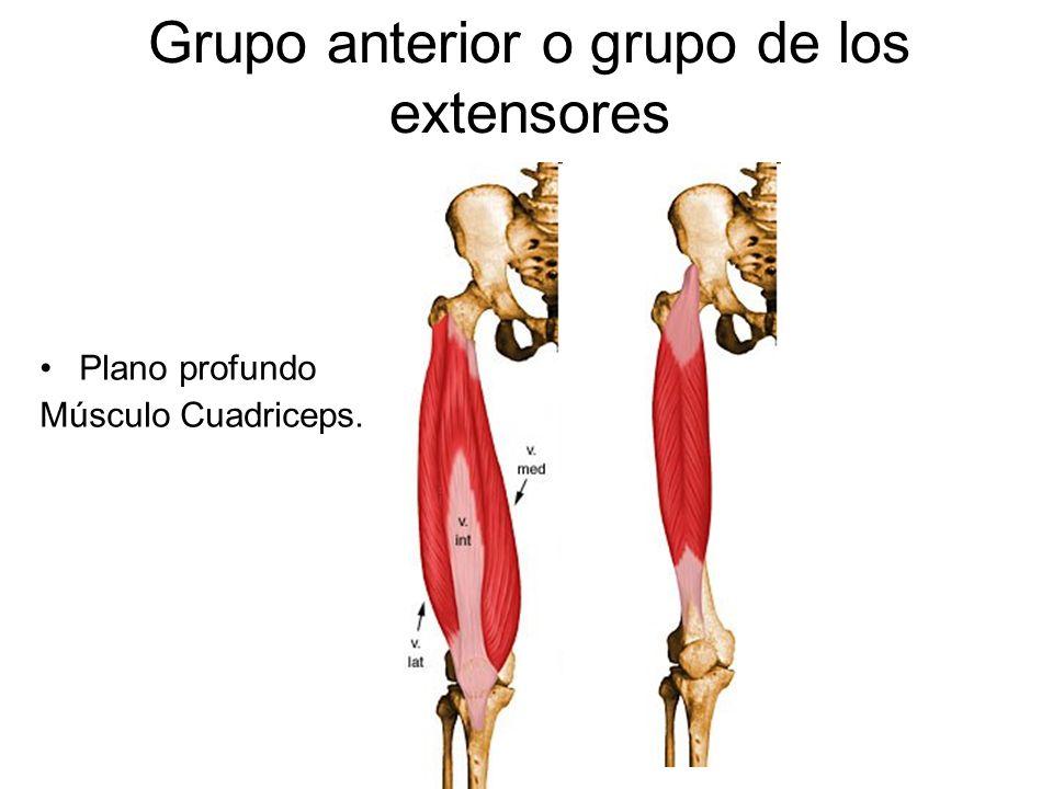 Músculos de miembro inferior - ppt video online descargar
