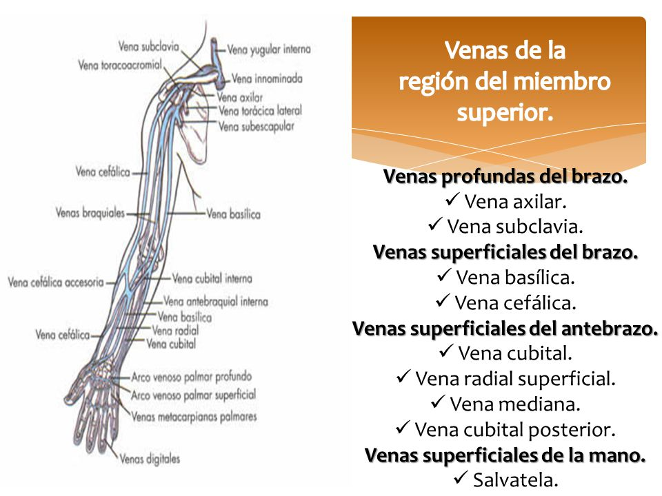 Región del Miembro superior. - ppt video online descargar