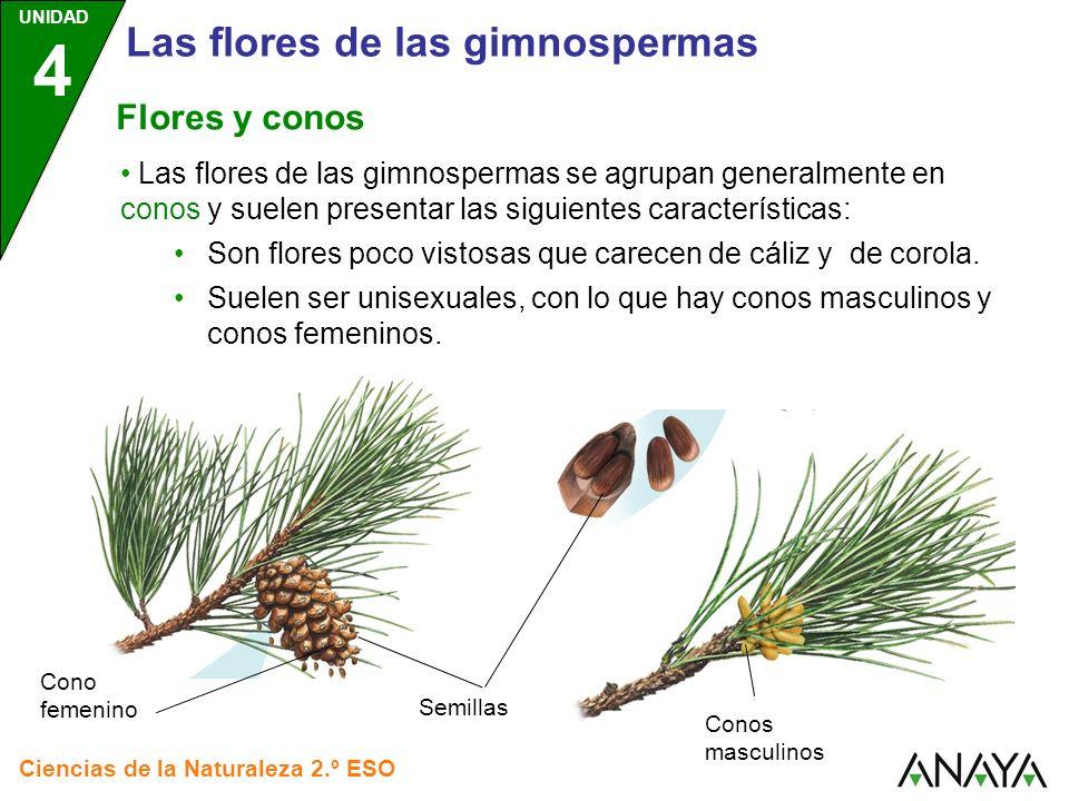 Las Flores De Las Gimnospermas Ppt Descargar