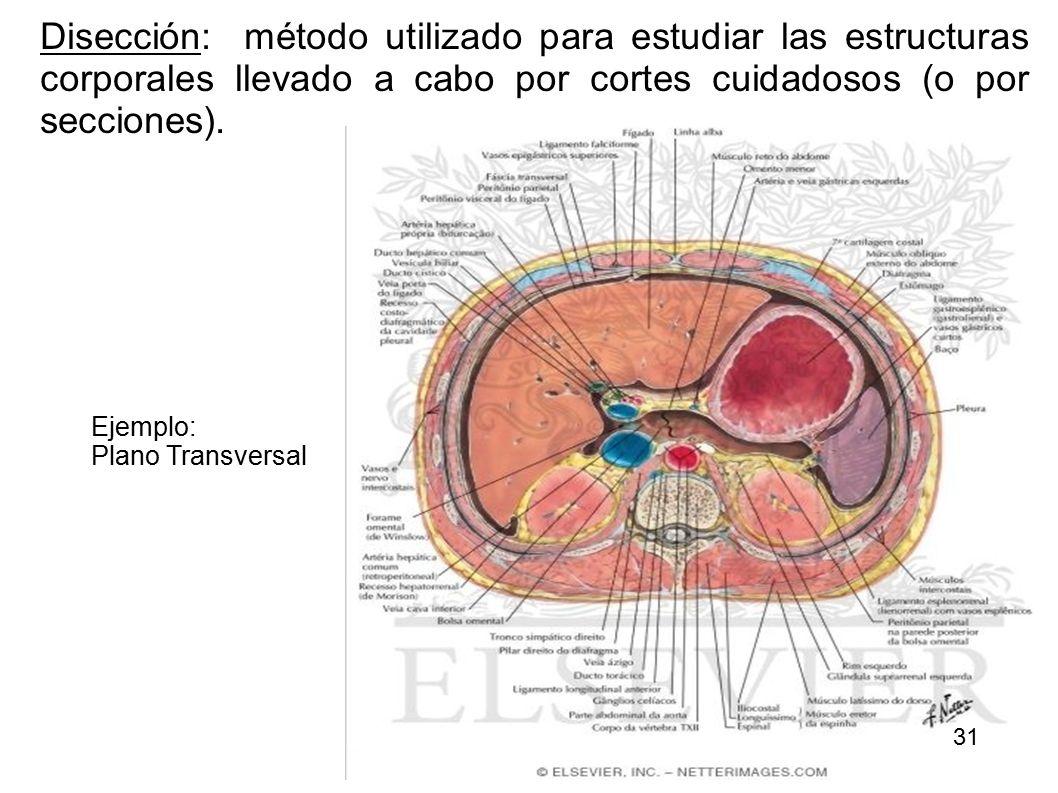 Organización del Cuerpo Humano Curso: Anatomía y Fisiología - ppt ...
