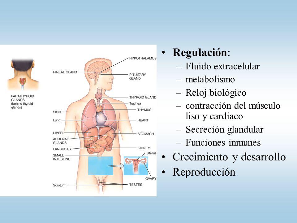 Cátedra de Anatomía y Fisiología Humana - ppt video online descargar