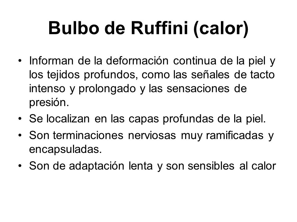 Bulbo de Ruffini (calor)