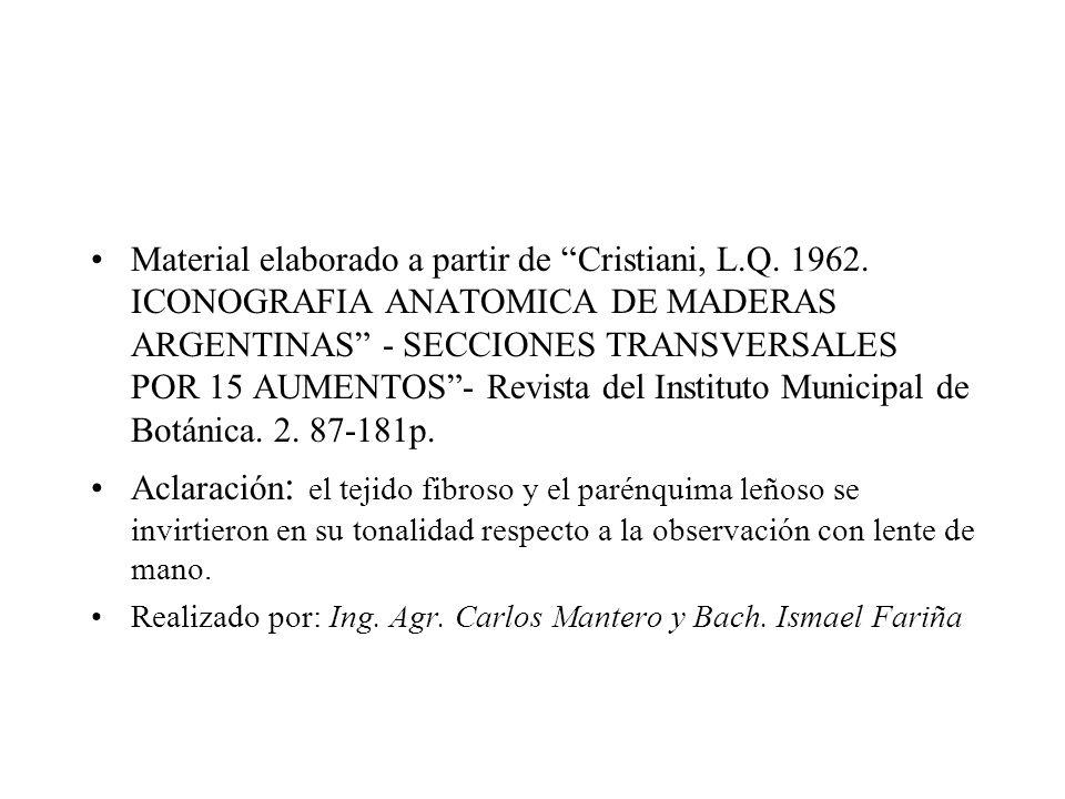 Elementos de Anatomía de Maderas - ppt descargar