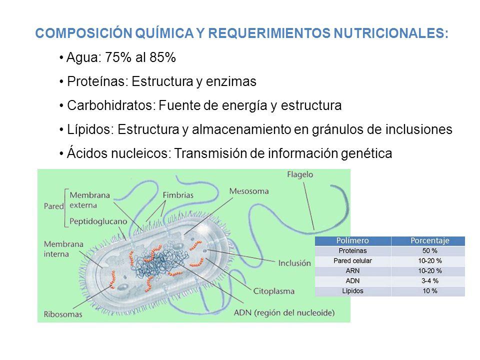 Fisiologia Bacteriana Ppt Descargar