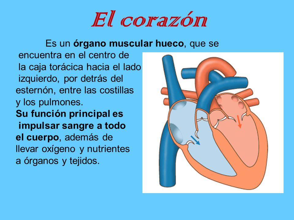 Encantador La Función Del Corazón Colección - Anatomía de Las ...