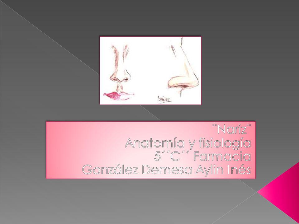 Nariz¨ Anatomía y fisiología 5´´C´´ Farmacia - ppt descargar