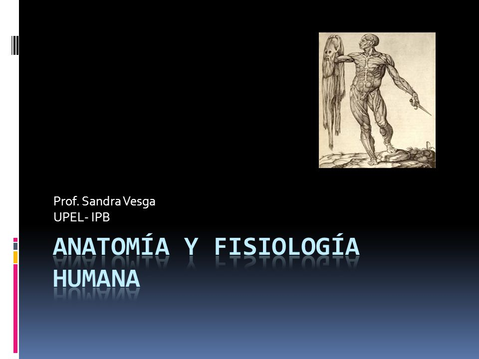 Anatomía y fisiología humana - ppt descargar