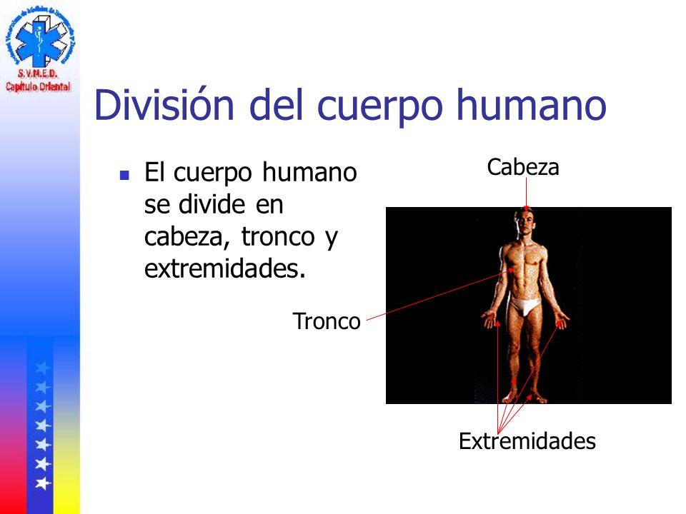Asombroso Divisiones Del Cuerpo Humano Fotos - Anatomía de Las ...