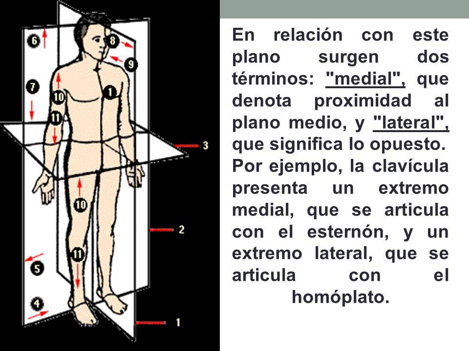 Dorable Lo Que Quiere Decir Articulada En La Anatomía Bandera ...