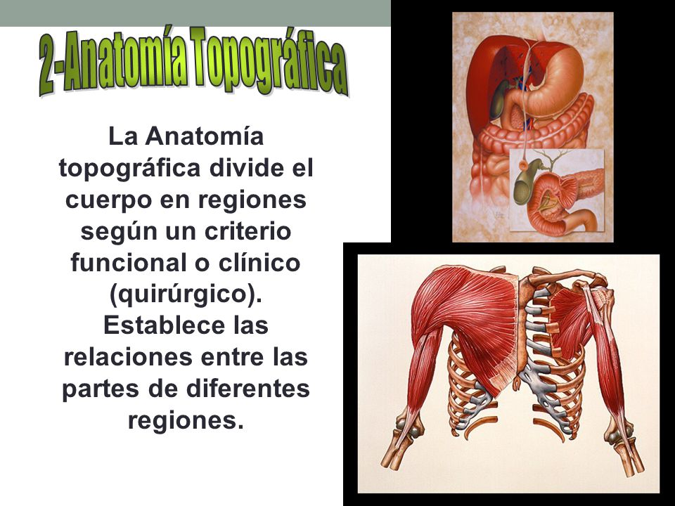 INTRODUCCIÓN A LA ANATOMIA - ppt video online descargar