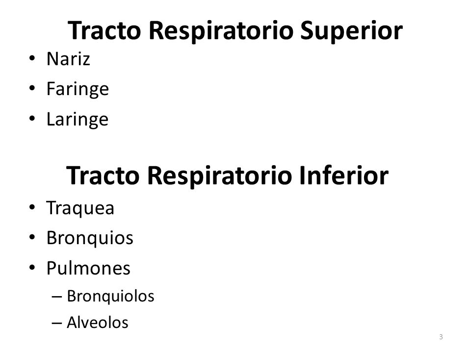 Sistema Respiratorio - ppt video online descargar