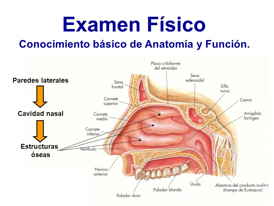 Examen Físico Nasal. - ppt video online descargar