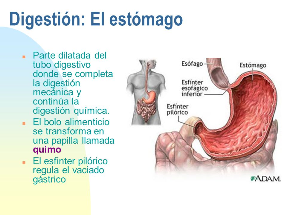FISIOLOGIA GASTROINTESTINAL - ppt descargar