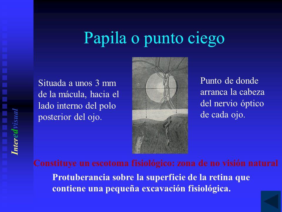 Conceptos básicos de anatomía visual - ppt descargar