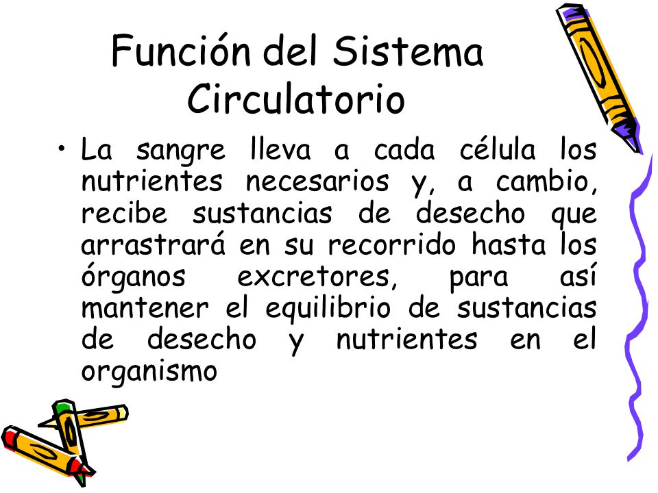 Función del Sistema Circulatorio