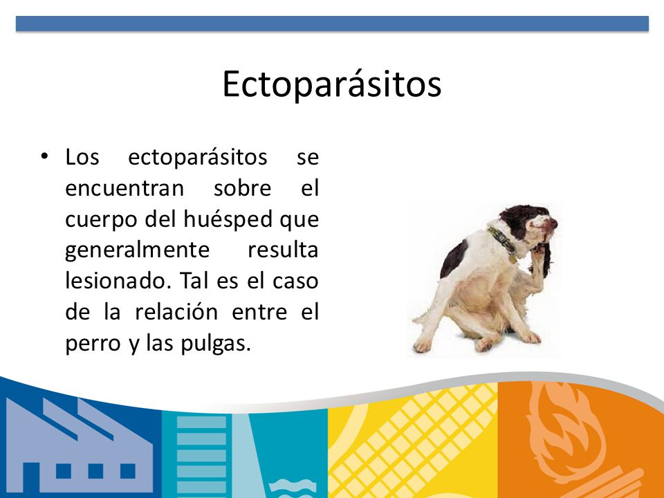 Ectoparásitos