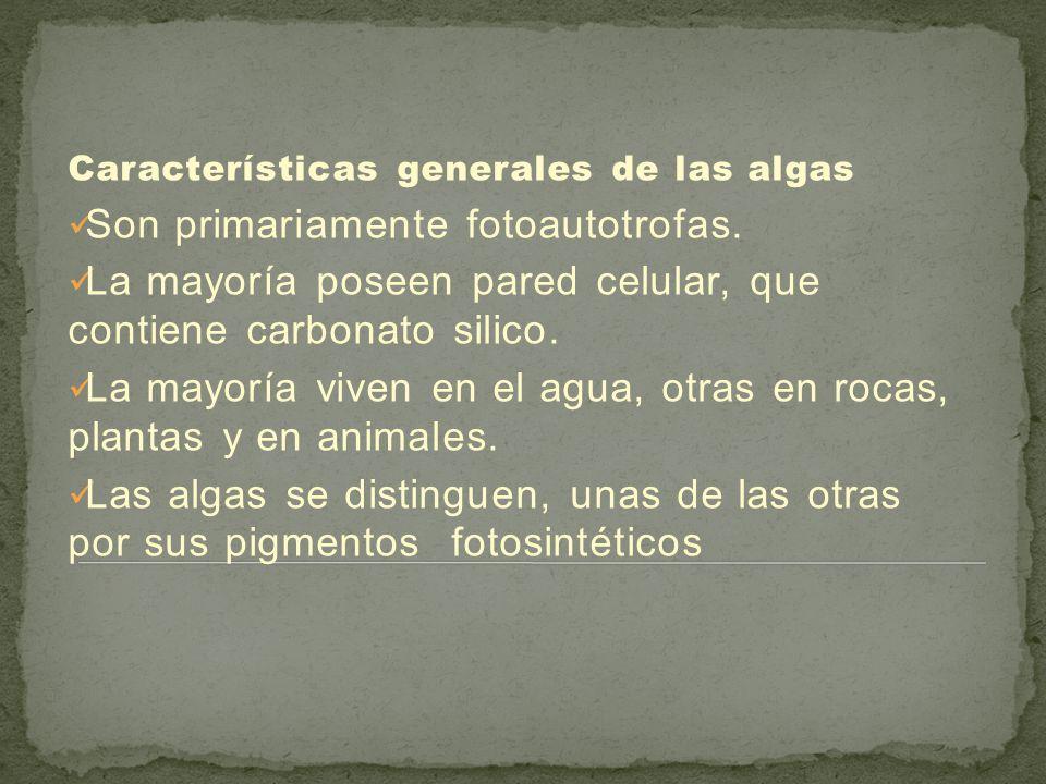 Distribución de algas. LAS ALGAS presentado por: KAROL YESALYN ...