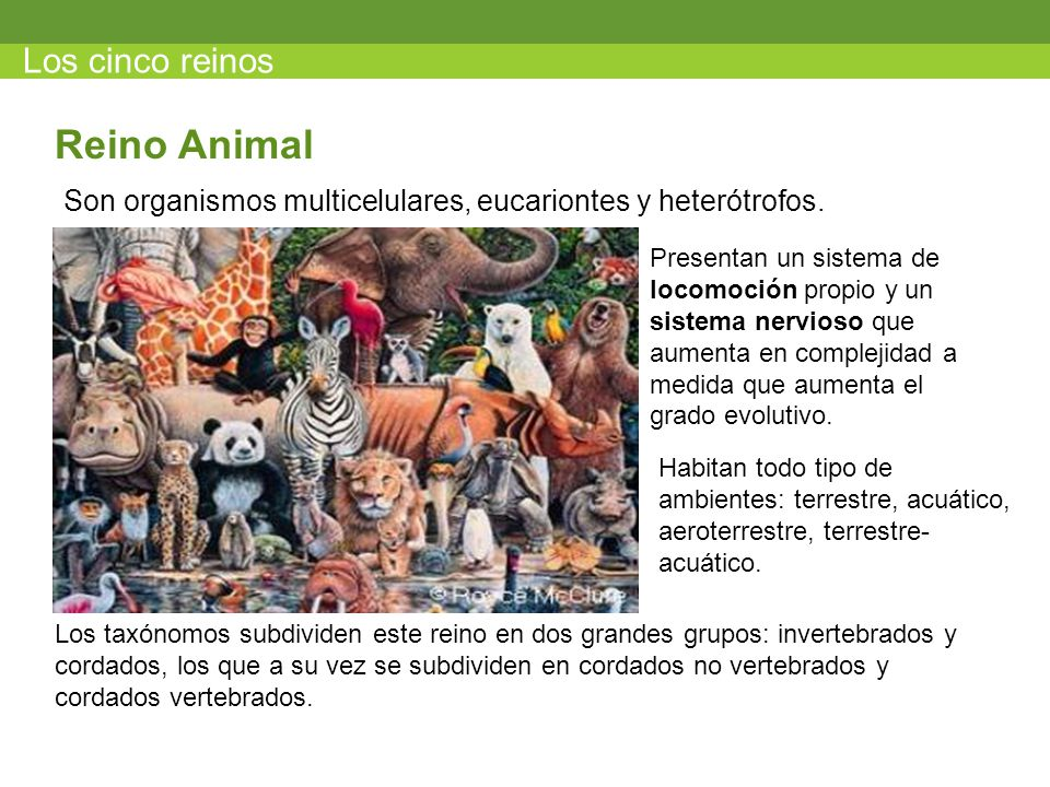 Reino Animal Los cinco reinos
