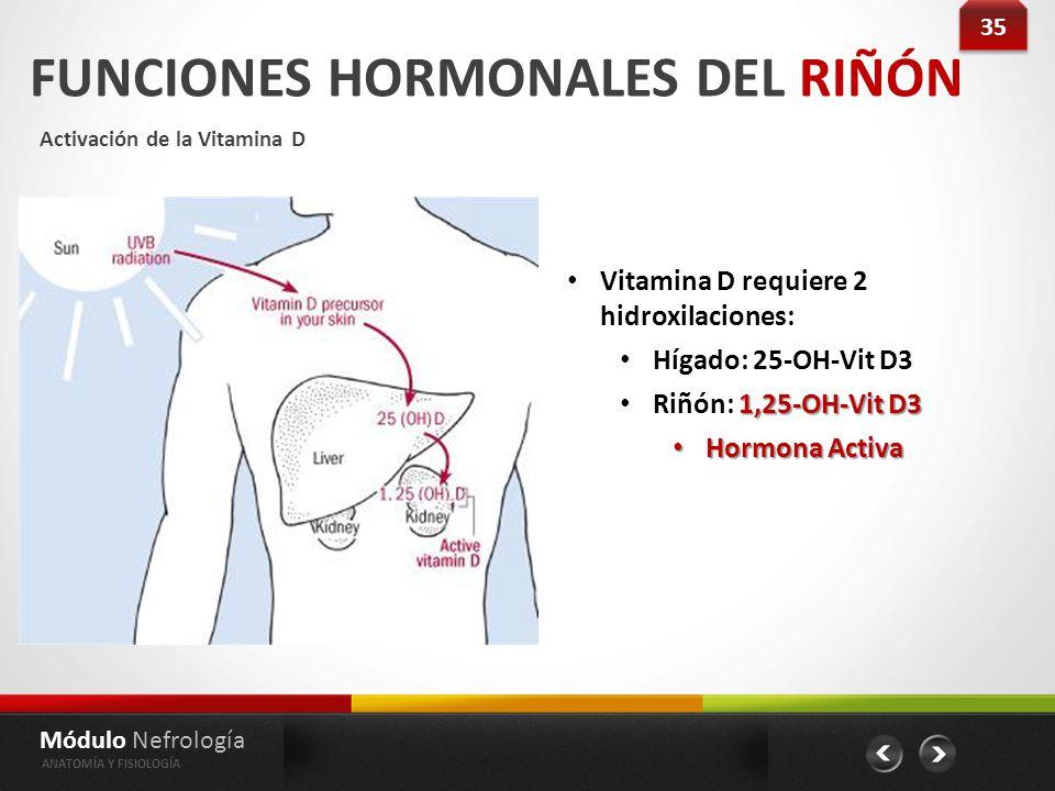 Módulo Nefrología Anatomía Fisiología Glomerulopatías Comience Aca ...