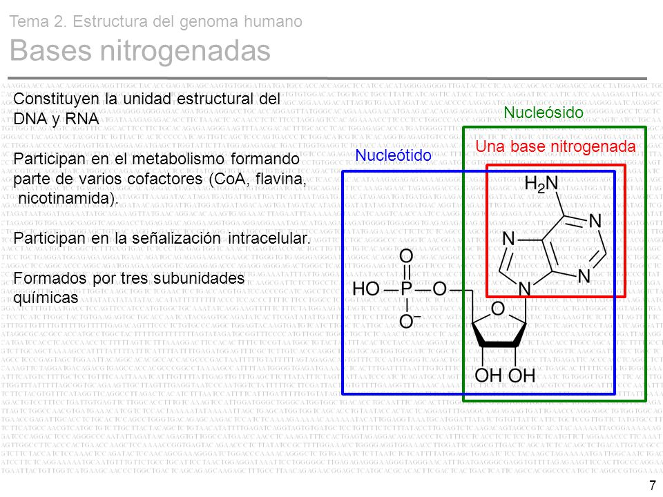 Estructura Del Genoma Humano Ppt Descargar