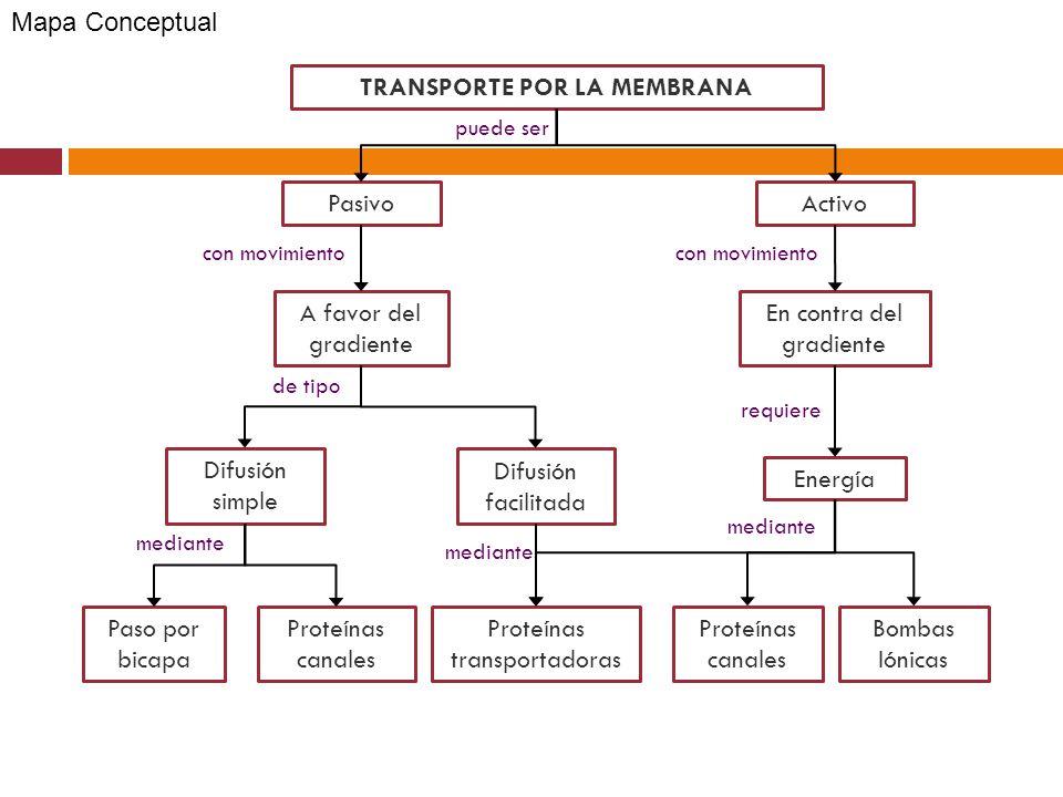 Y El Transporte A Través De La Membrana Ppt Descargar