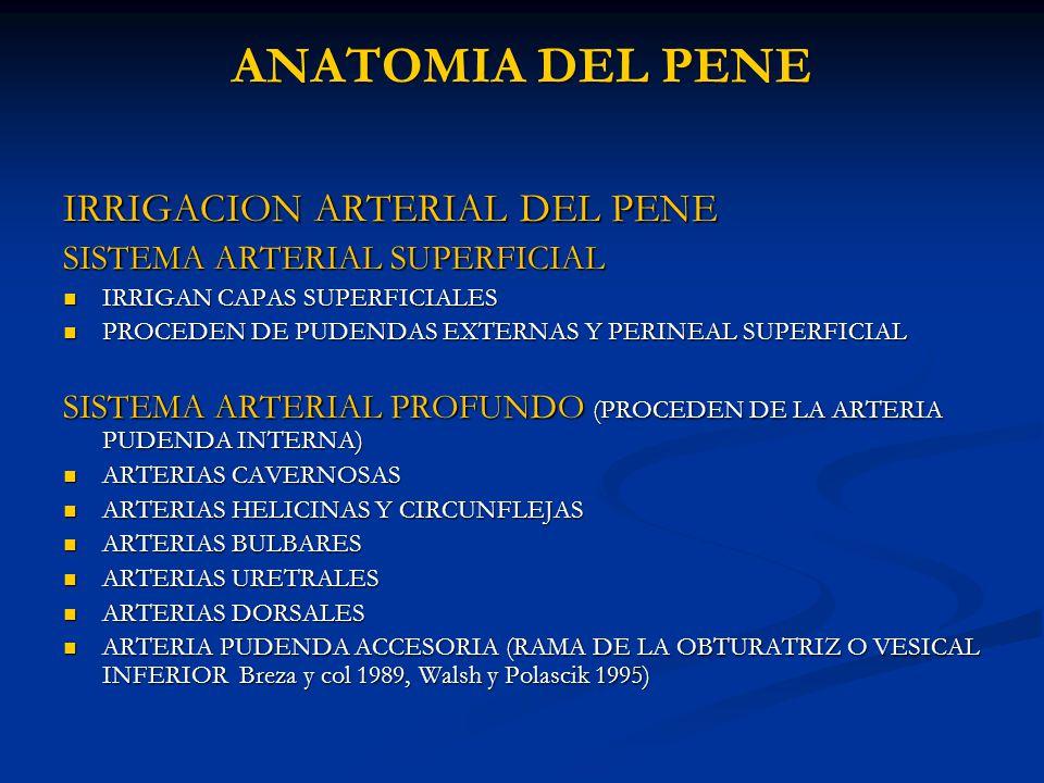 ANATOMIA DEL PENE Dr. Alejandro Estrada. - ppt video online descargar